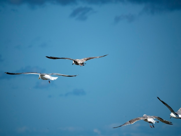 Quatro gaivotas voam no céu azul em um dia ensolarado