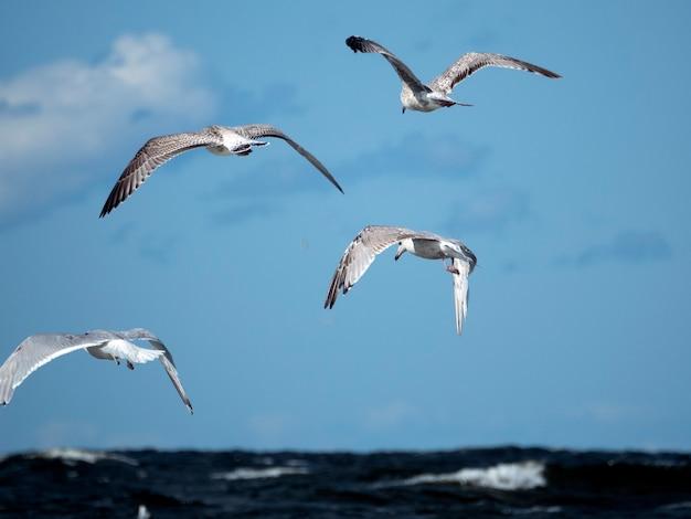 Quatro gaivotas voam sobre as ondas do mar, caçando peixes em um dia ensolarado