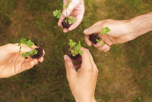 Quatro pessoas com as mãos segurando as pequenas plantas no jardim