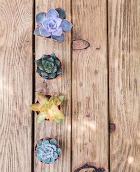 Quatro plantas suculentos na placa de madeira como pano de fundo. vista do topo.