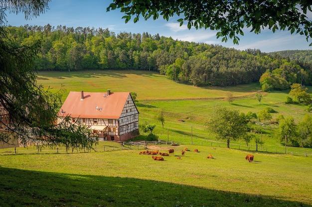 Que região linda, o odenwald