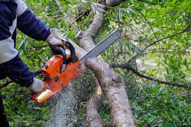 Quebrou o tronco da árvore depois que um furacão do homem está cortando uma árvore com uma serra elétrica
