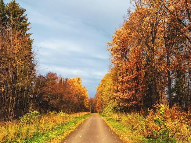 Queda de folhas de outono. caminho ensolarado em um parque nublado de outono com folhas caindo. uma estrada secundária através de uma floresta estacional decidual.