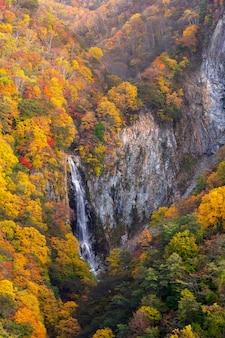 Queda de kanman no outono em mt.shigakogen, nagano, japão.