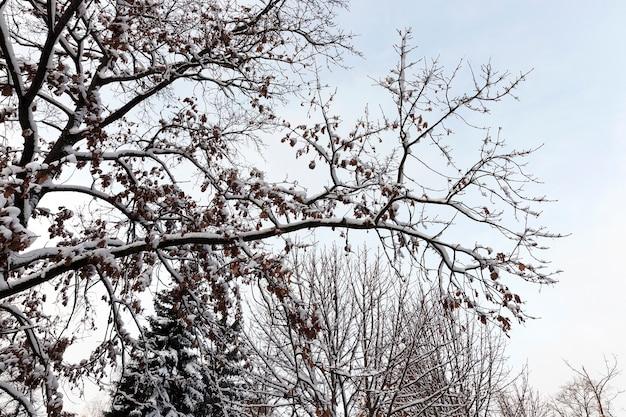 Queda de neve branca após uma queda de neve