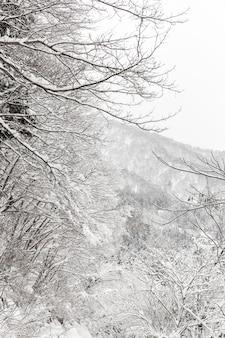 Queda de neve com floresta