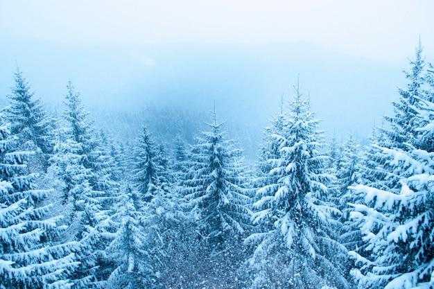 Queda de neve na floresta de montanha de inverno