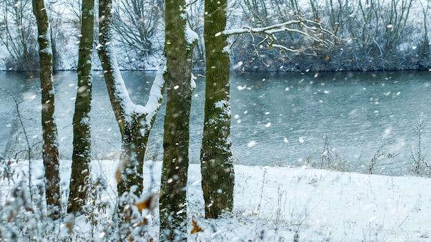 Queda de neve na floresta perto do rio, paisagem de inverno