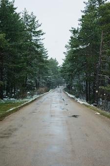 Queda de neve nas montanhas, estrada na floresta
