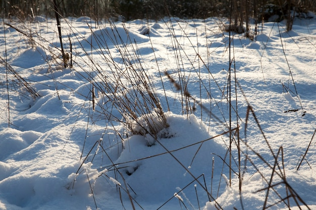 Queda de neve no inverno