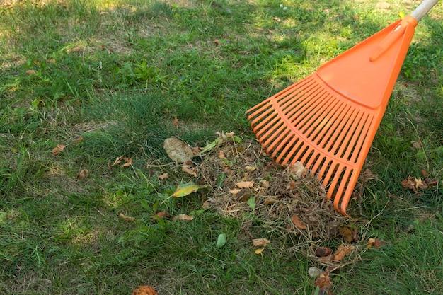 Queda e remoção de folhas no outono. folhas de ancinho em um prado com ancinhos no jardim