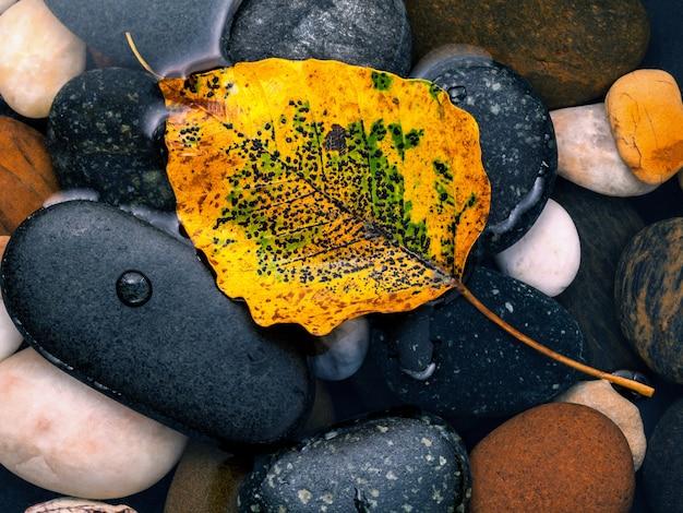 Queda e zen como conceitos laranja deixar cair na pedra do rio.