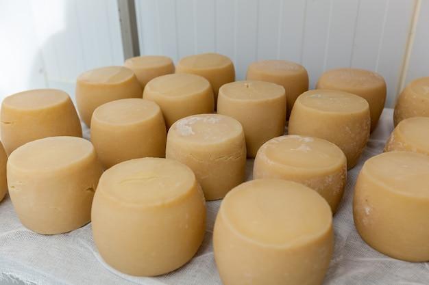 Queijos duros, diferentes tipos de queijos nas prateleiras de uma geladeira em uma fábrica de queijos
