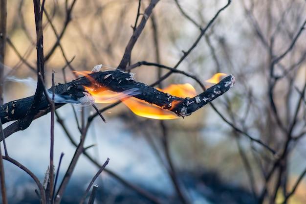 Queima de floresta, floresta brasileira em chamas