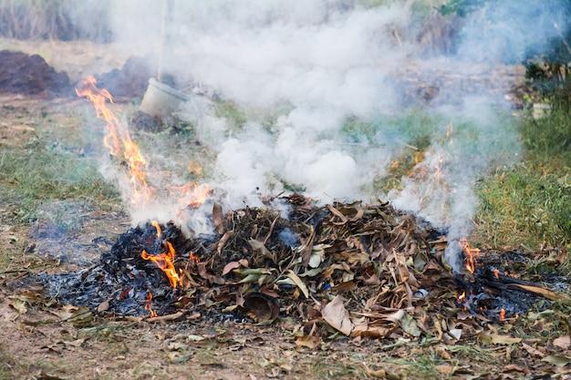 Queimar a folha seca de fogo no jardim