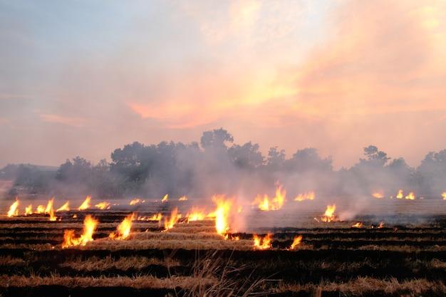 Queimar palha seca no campo ao lado da estrada na tailândia Foto Premium