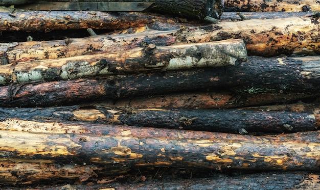 Questões ambientais - fundo de árvores serradas na floresta