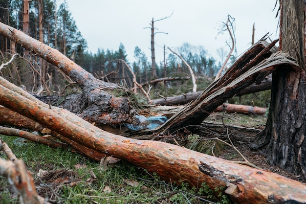Questões ambientais, problemas. garrafa de plástico no tronco de uma árvore caída de pinheiro. queda inesperada na floresta de pinheiros. danos causados por tempestades. árvores caídas na floresta de coníferas após o vento forte do furacão.