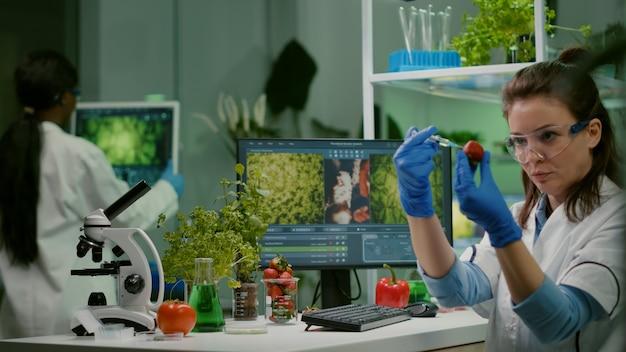 Químico cientista injetando morango com pesticidas e examinando frutas transgênicas para agricultura