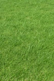 Quintal planta grama