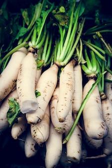Rabanete branco cenoura comida vegetal