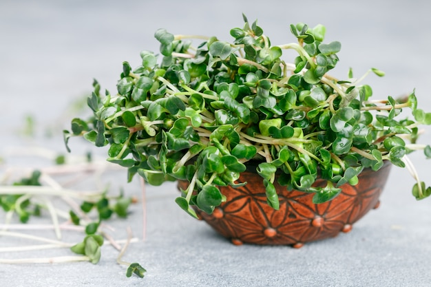 Rabanete orgânico verde cru ou daikon microgreens