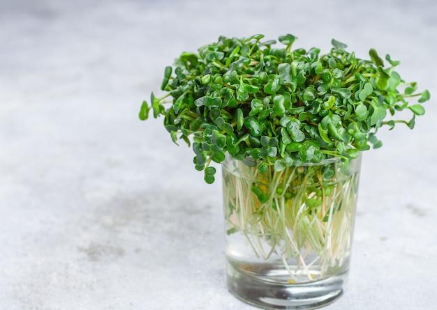 Rabanete orgânico verde para fazer saladas frescas