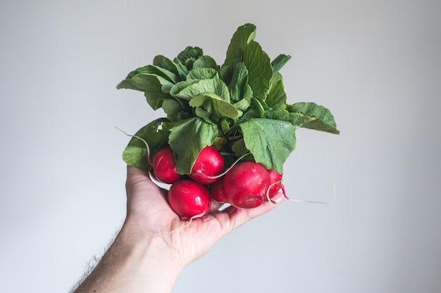 Rabanete vermelho na mão com fundo branco