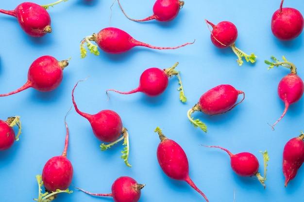 Rabanetes vermelhos maduros em camada plana e azul