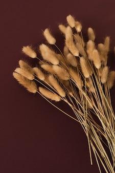 Rabo de coelho fofo rabo de coelho planta ramos ramalhete em bordô