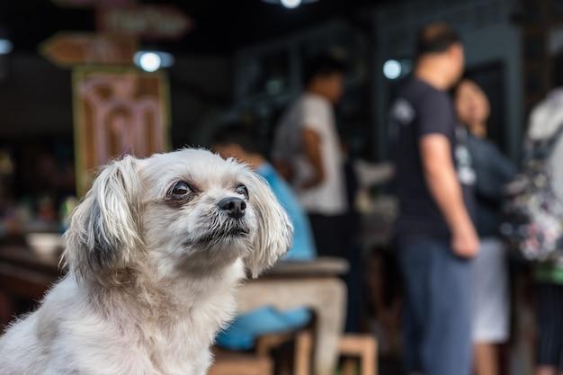 Raça misturada da cor bege tão bonito do cão com divertimento feliz