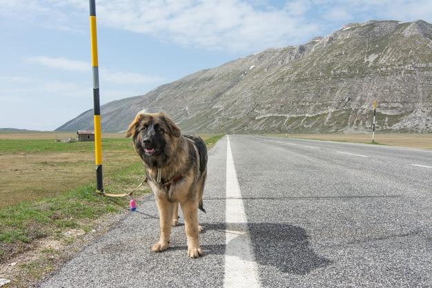 Raça misturada na estrada na montanha