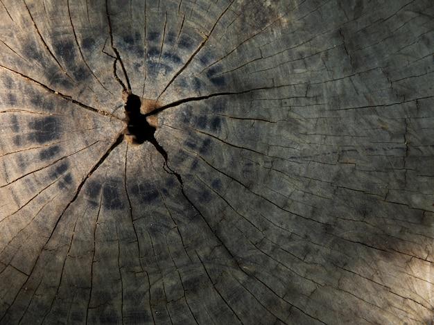 Rachaduras da visão superior do velho coto