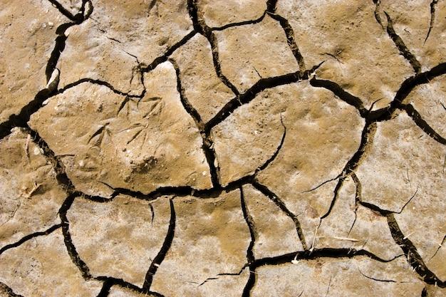 Rachaduras no solo durante uma seca