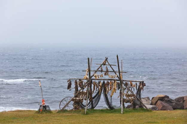 Rack para secagem de peixe na costa norte da islândia