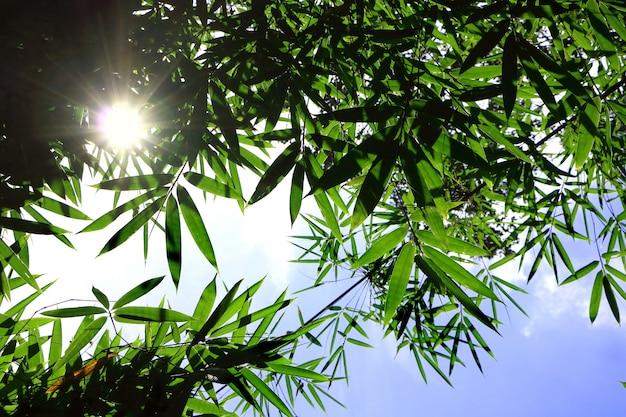 Raio de sol brilhar através de folhas de bambu verde no céu azul olhar fresco sentindo fresco e bonito