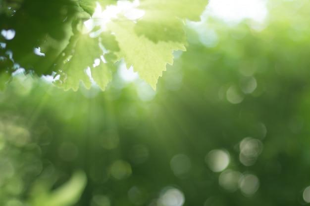 Raios, amanhecer, com, planta verde, obscurecido, floresta, fundo