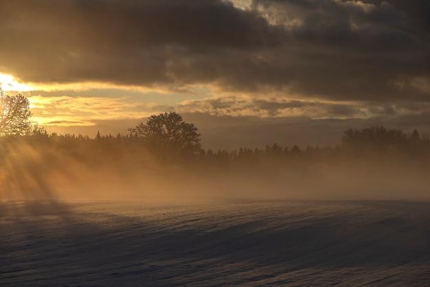 Raios bonitos através dos carvalhos de manhã gelada, vista do nascer do sol de inverno em krimulda, letônia