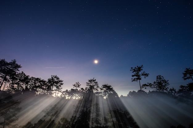 Raios da lua de vista panorâmica irradiando através das árvores de silhueta.