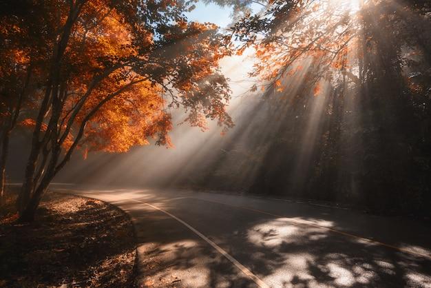 Raios de luz do sol caindo através de árvores de outono