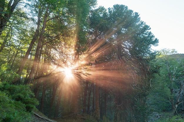 Raios de sol ao pôr do sol
