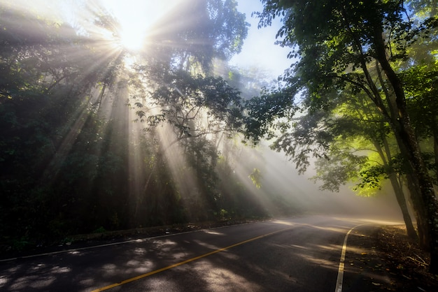 Raios de sol através da névoa e floresta na estrada