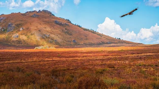 Raios de sol em um vale de montanha de outono com uma ave de rapina voando. cenário dramático de outono com sol de ouro de montanha e montanhas multicoloridas.