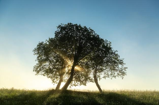 Raios de sol rompendo os galhos das árvores no início da manhã.