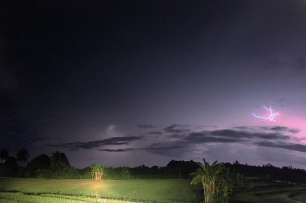 Raios luminosos à noite sobre plantações e coqueiros
