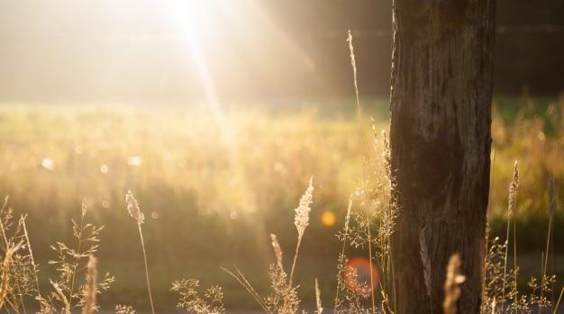 Raios solares no campo