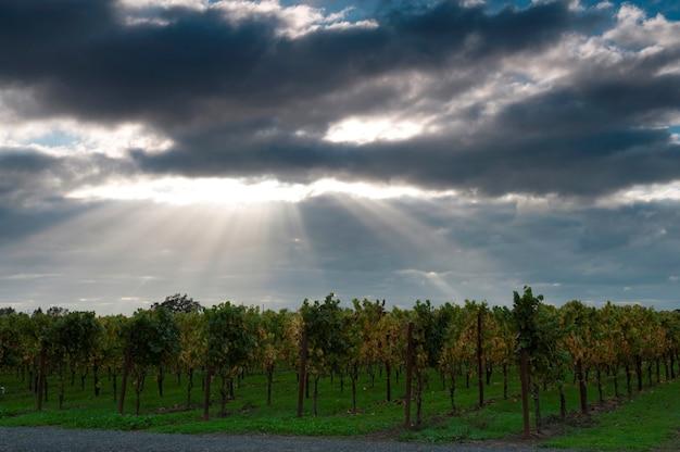 Raios solares sobre árvores