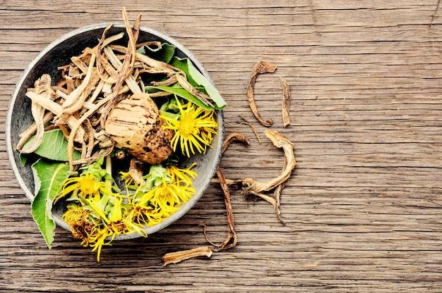 Raiz e flores de inula