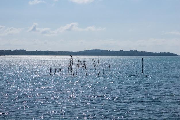 Raizes aéreas no mar com reflexão do sol e ilhas verdes no fundo.