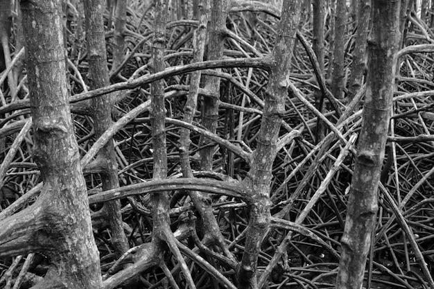 Raízes de mangue abstrata na natureza